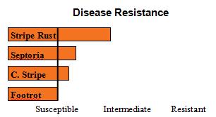 Kaseberg - Soft White Winter Wheat - Disease Resistance