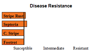 Mary - Soft White Winter Wheat  - Disease Resistance