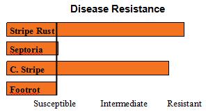 Norwest Duet - Soft White Winter Wheat - Disease Resistance