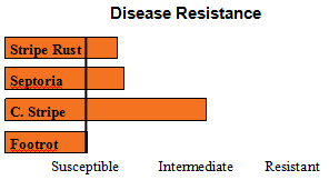ORCF 103 - Soft White Winter Wheat - Disease Resistance