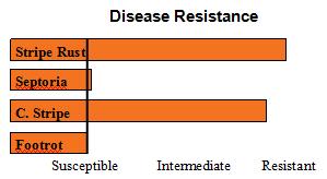 Skiles - Soft White Winter Wheat  - Disease Resistance